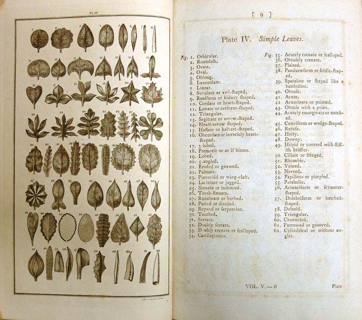 Linneaus chart.jpg